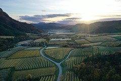 Irrigated apple orchards, Grand vallon, France