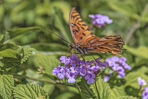 Mariposa del Jardin Botanico