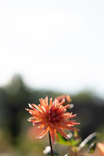 20191026 Floral Garden Yosami 5