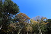Photo:Tinted autumnal leaves / 紅葉(こうよう) By TANAKA Juuyoh (田中十洋)