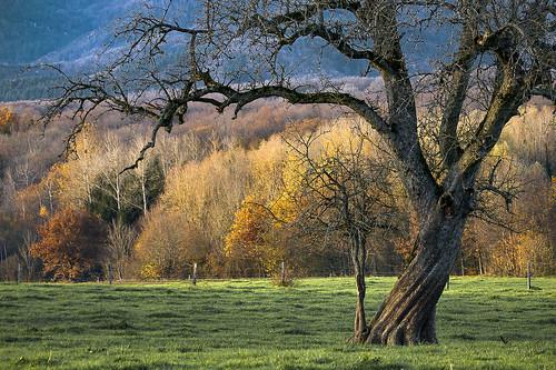 L'arbre torsadé