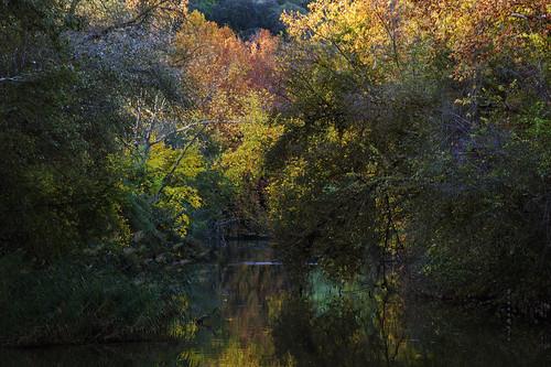 Bosque de Ribera...