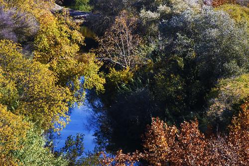 Bosque de Ribera II
