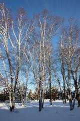 Winter Campus Scenes-17