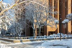 Winter Campus Scenes-5