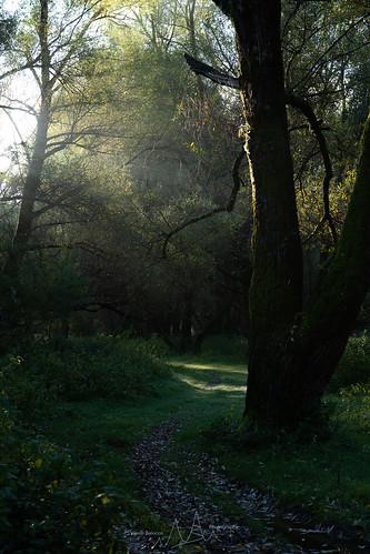 Un mattino nel bosco
