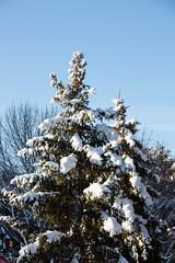 Winter Campus Scenes-19