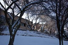 Winter Campus Scenes-18