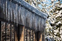 Winter Campus Scenes-11