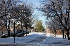 Winter Campus Scenes-3