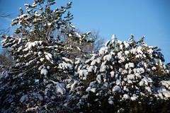 Winter Campus Scenes-2