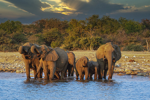 Late Afternoon At The Waterhole.