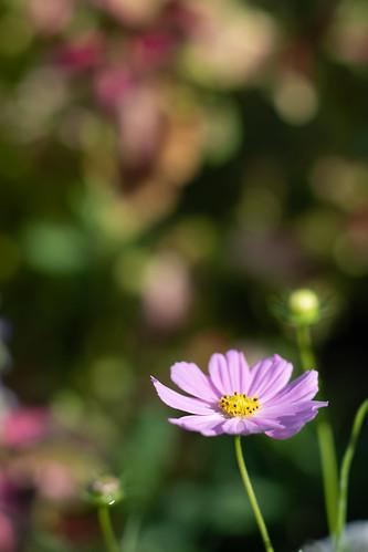 20191026 Floral Garden Yosami 6