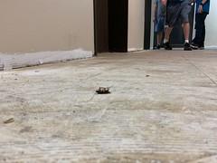 bugs in office buildings off loop 410
