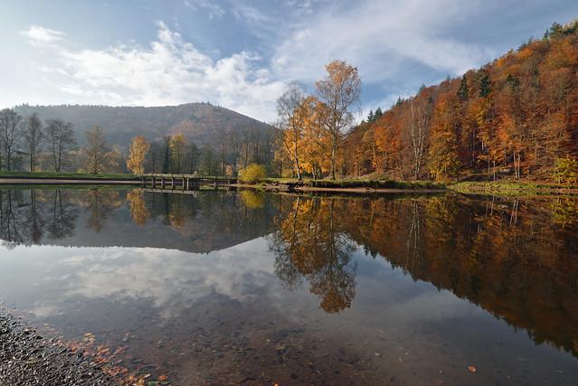 L'étang dévoile ses reflets…2