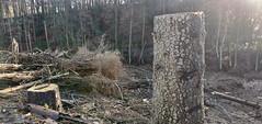 Da war mal Wald