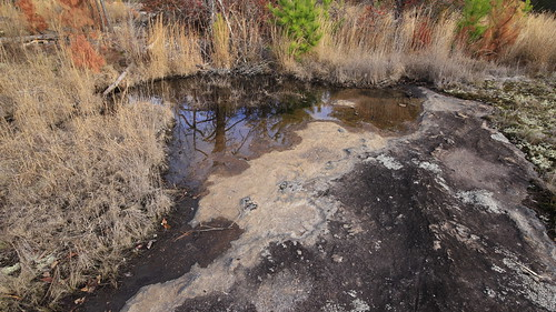 Landscape with Mud Puddle