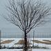 Tree at the University Farm