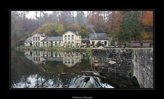 Étang de la Loge- Coye-la-Forêt- Forêt de Chantilly- Oise- France
