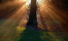 "Cincinnati - Spring Grove Cemetery & Arboretum ""Sunday Morning Rays"""