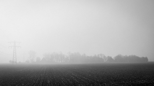 Polderview in the mist