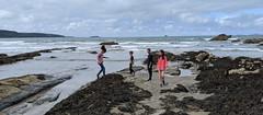 Crossing The Seaweed