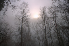 Soleil d'hiver, tendres pastels...
