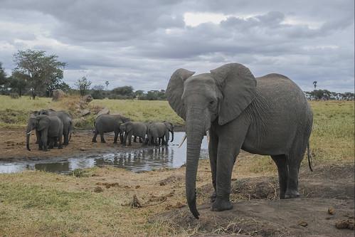 _P2Q4336 Tarangire, Tanzania