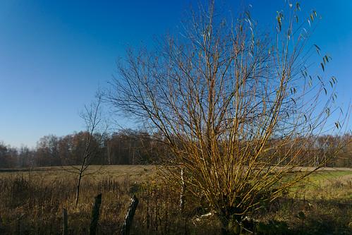 Landenne - Seilles - Réserve Naturelle de Sclaigneaux