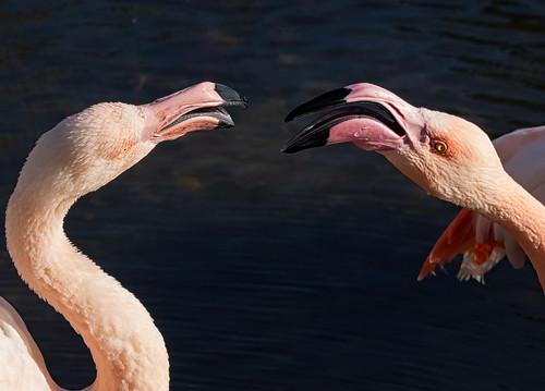 Two birds arguing