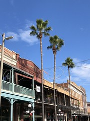 Palms and storefronts, 7th Avenue, Ybor City, Tampa, Florida