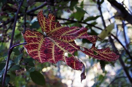 Nature - Autumn