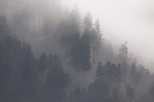 La forêt vosgienne