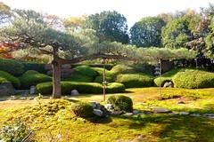 Ikka-in, Ikimatsu-no-niwa (Southern Garden) -1 (December 2019)