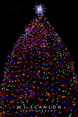 Christmas Tree Lighting | Collierville, Tennessee