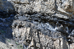 Phosphoria Formation (Permian; Astoria Hot Springs roadcut, Teton County, Wyoming, USA) 31