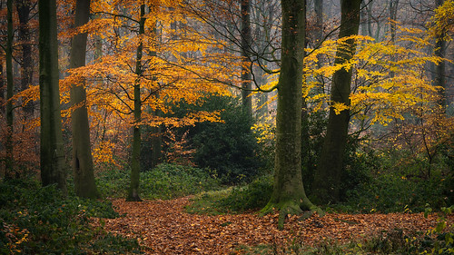 Autumn in a local woodland (1/2)