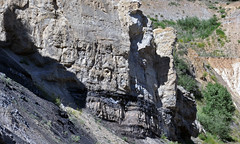 Phosphoria Formation (Permian; Astoria Hot Springs roadcut, Teton County, Wyoming, USA) 24