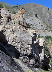 Phosphoria Formation (Permian; Astoria Hot Springs roadcut, Teton County, Wyoming, USA) 26