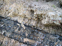 Phosphoria Formation (Permian; Astoria Hot Springs roadcut, Teton County, Wyoming, USA) 20