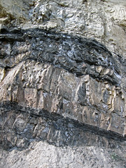 Phosphoria Formation (Permian; Astoria Hot Springs roadcut, Teton County, Wyoming, USA) 17
