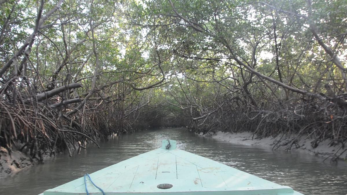 Mar, rio, dunas e manguezais: conheça o assentamento Barra das | Geral