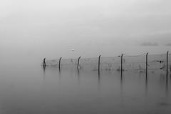 Fog, mist and rain