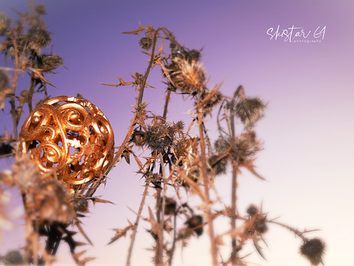 Adventszeit (03)