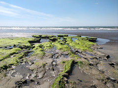 Peat in the submerged forest, Borth