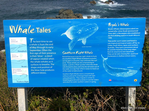 Whale Tales Interpretive Sign, Saltwater Point, Saltwater National Park, Mid North Coast, NSW