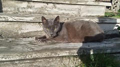 Charcoal Kitty - Woodlawn Park