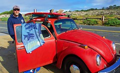 1974 Surfer Bug