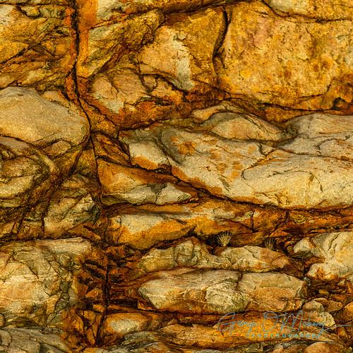 Copper Coast Up Close 1