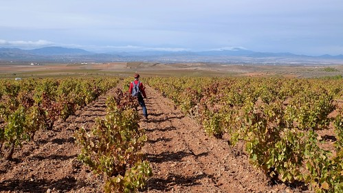 In the vineyard ...
